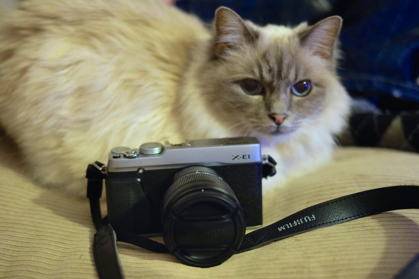 The Cat Photographer